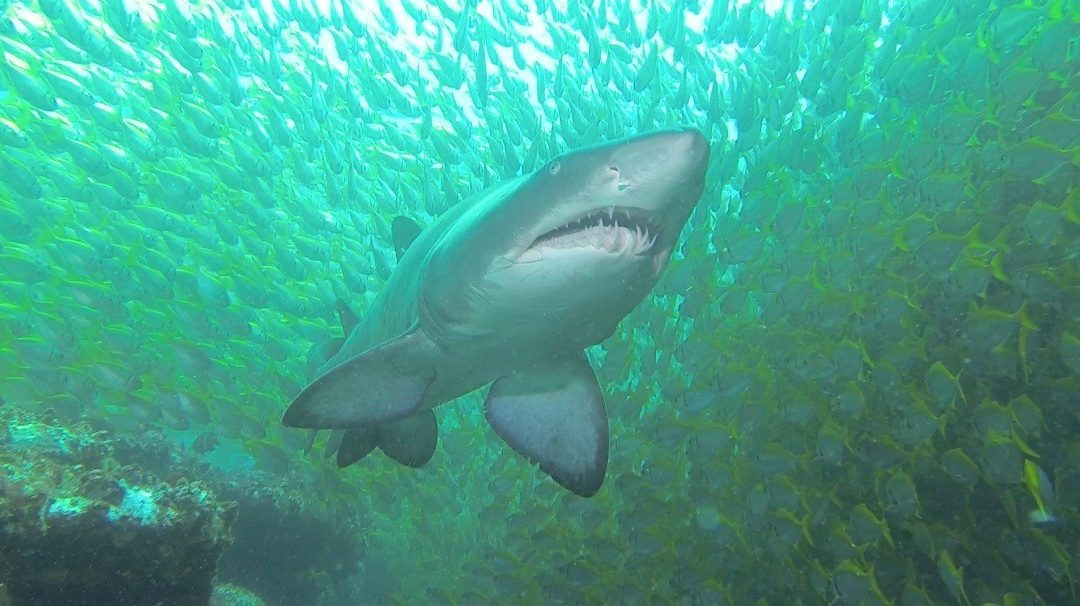 Apartments – Grey Nurse Shark Dive