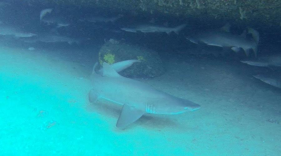 Magic Point Shark Dive (Green)
